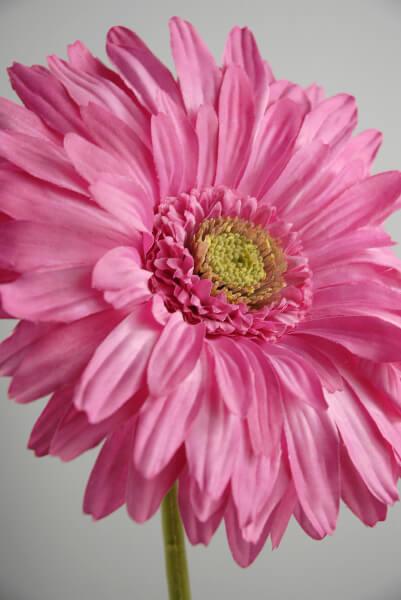 """Pink Gerbera Daisies 7"""" Flowers"""