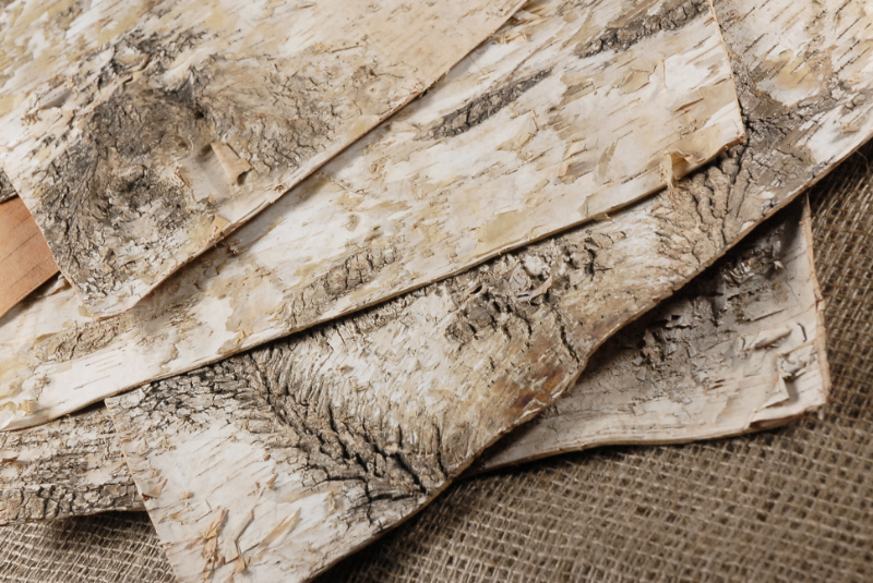 6 Birch Bark Sheets 15in