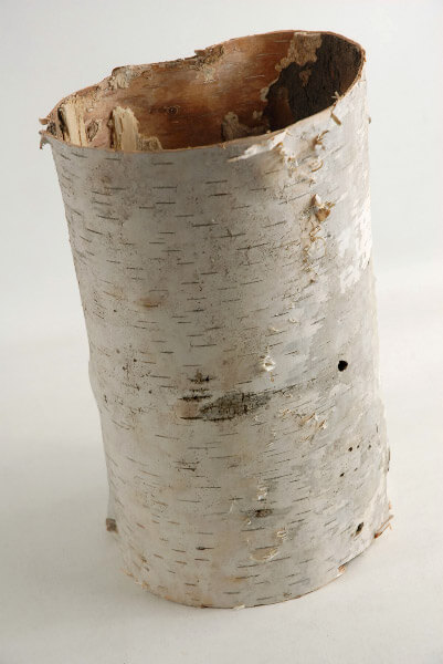 Natural Birch Bark Tubes (7-10in)