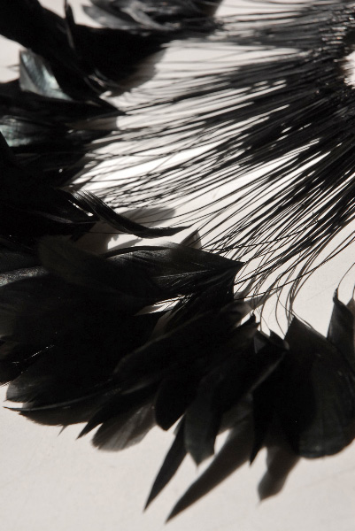 "Coque Black Feathers Rooster 6-8"" 144 feathers"