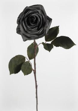 Black Silk Roses