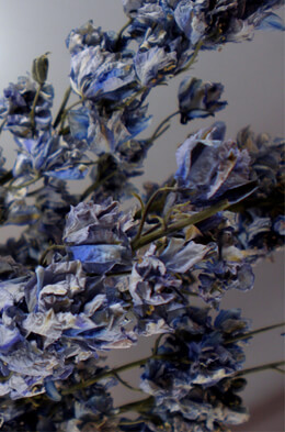 Dried Blue Larkspur Flower Stems 24""