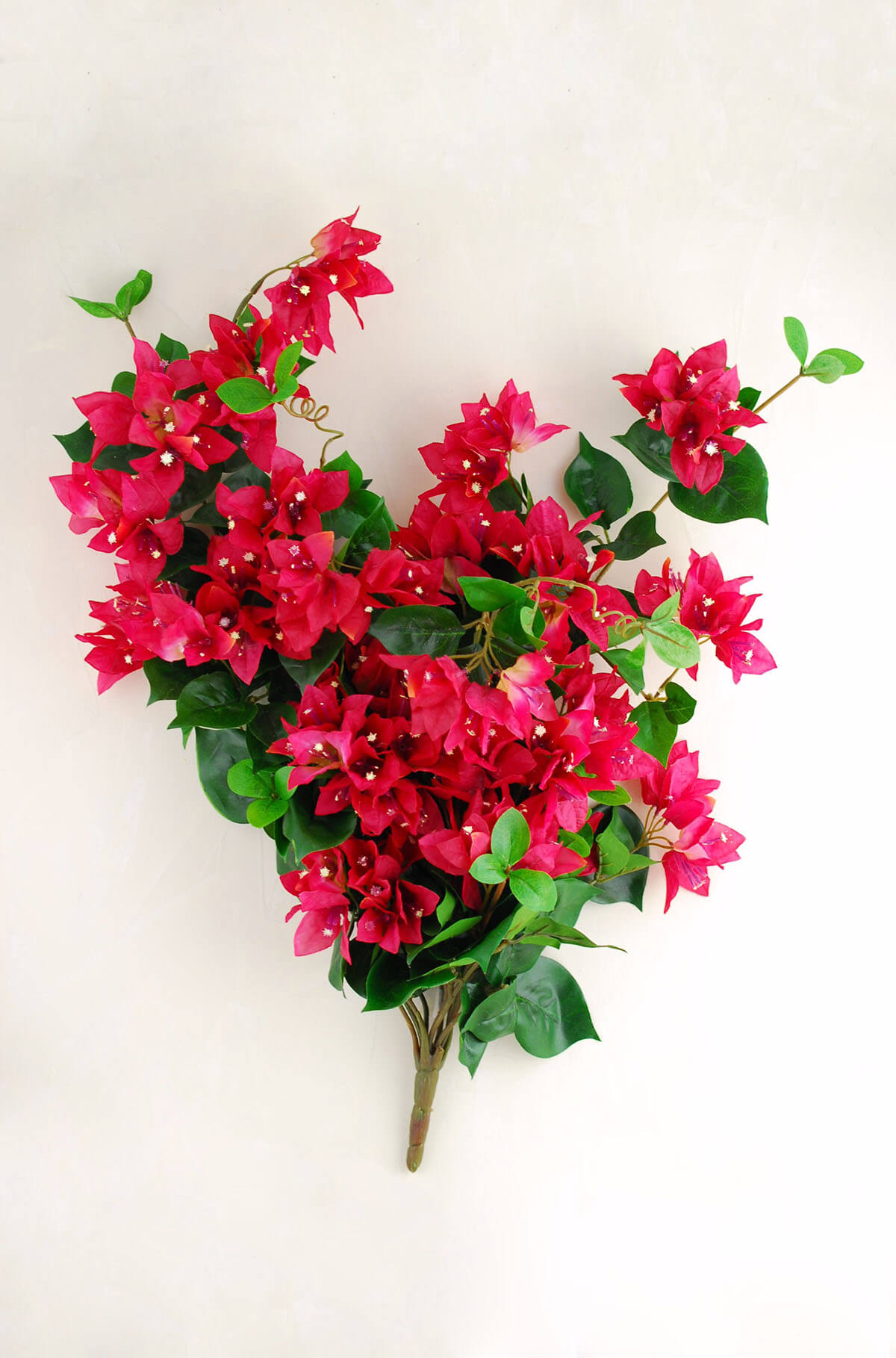 bougainvillea bush red 25in