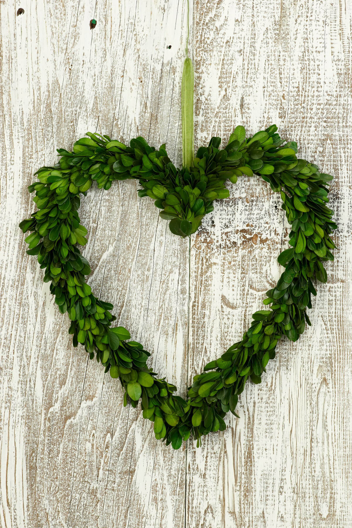 Preserved Boxwood 11 Quot Heart Wreath