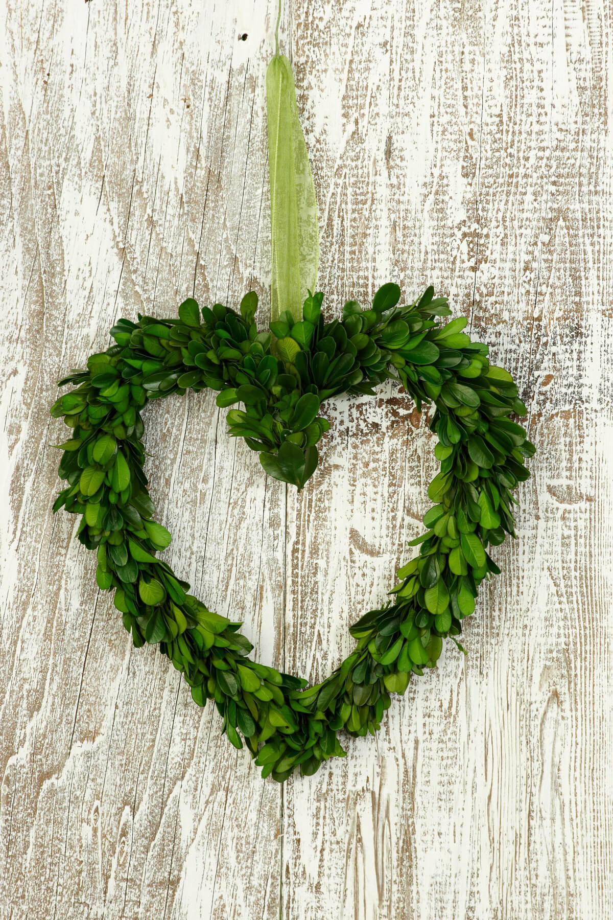 Boxwood Wreath Heart Preserved 9in