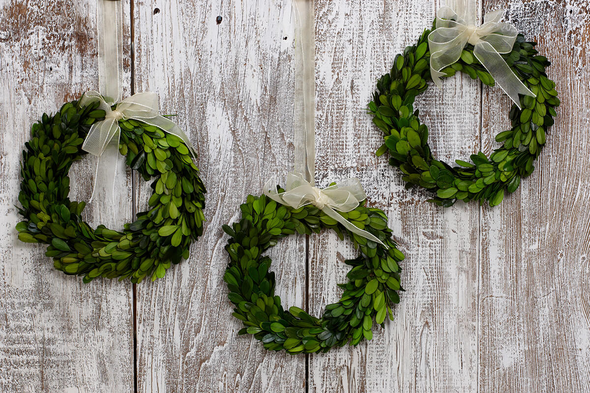 8 Quot Preserved Round Boxwood Wreaths With Ribbon