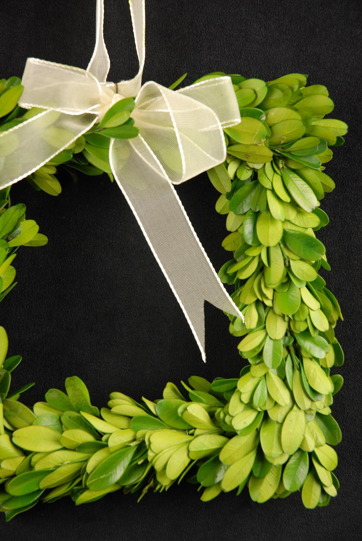 Boxwood Wreath Square 8in
