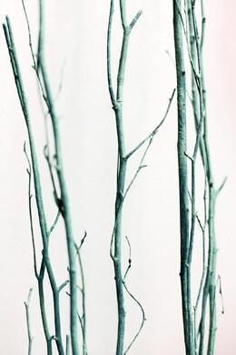 5 Seafoam Green Birch Branches Birch