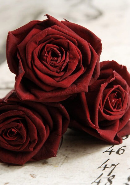 Preserved Roses 2 5in Red Burgundy 6 Roses