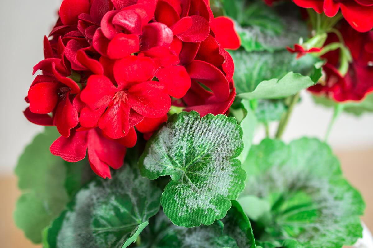 """Red Geraniums 14.5"""""""