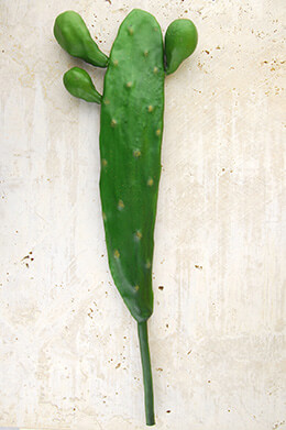 "Tall 17"" Cactus Stem Large"