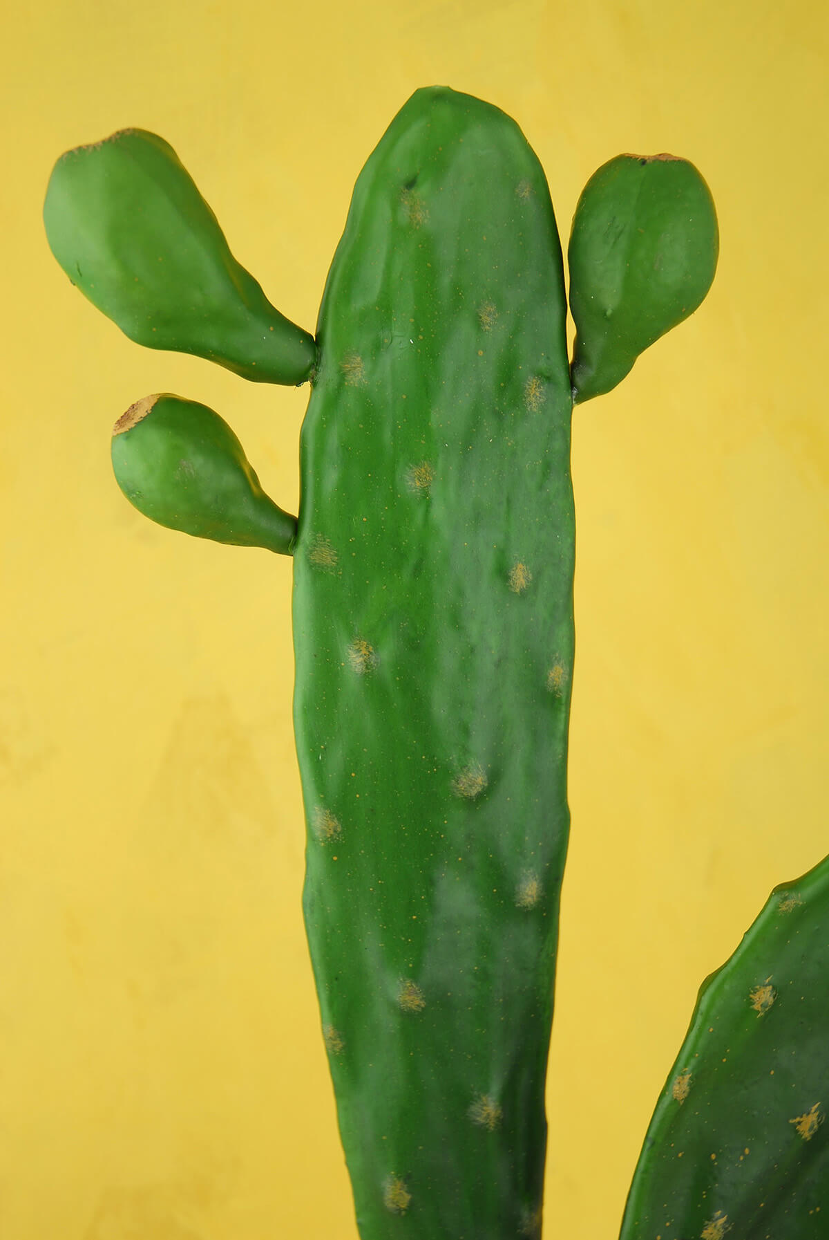 Tall 17 Quot Cactus Stem Large