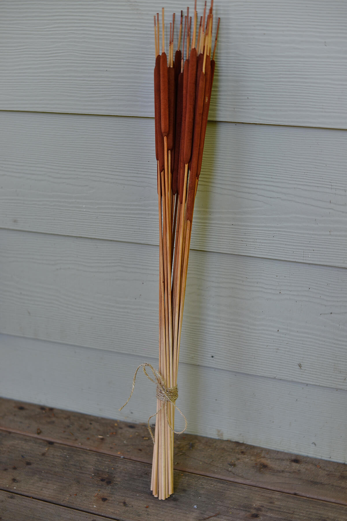 24 Preserved Natural Cattails 28""