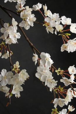 Branches- Artificial, Cherry Blossoms
