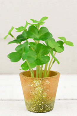 """Clover Potted Plant 7"""""""