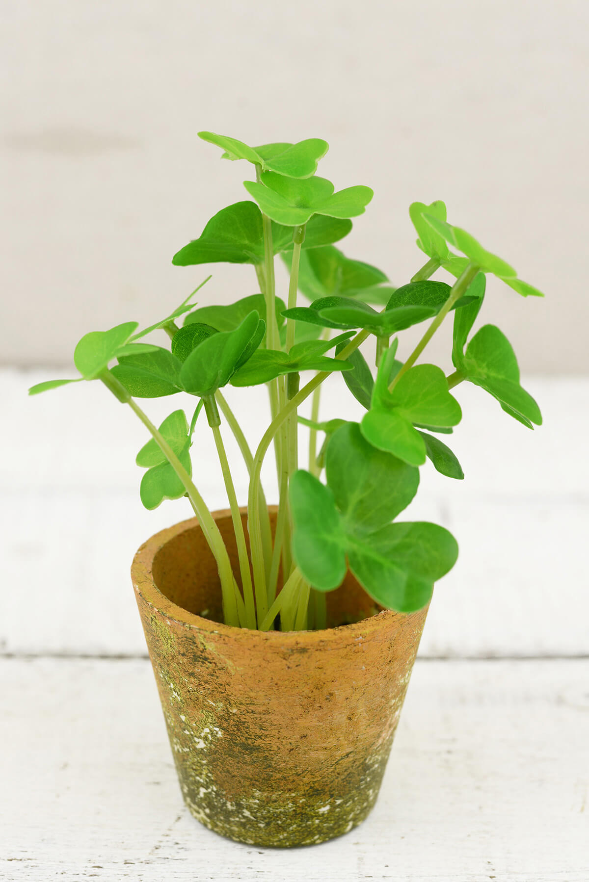 Clover Potted Plant 7 Quot