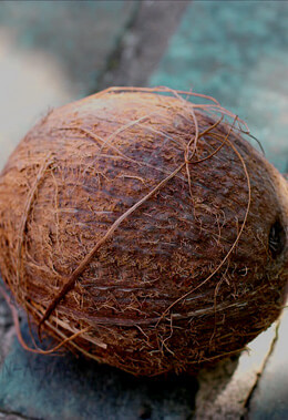 Coconut with Husk 7in Artificial