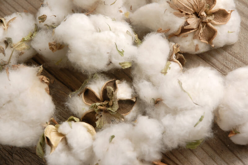Natural Cotton Bolls 12 Bolls Vase Filler