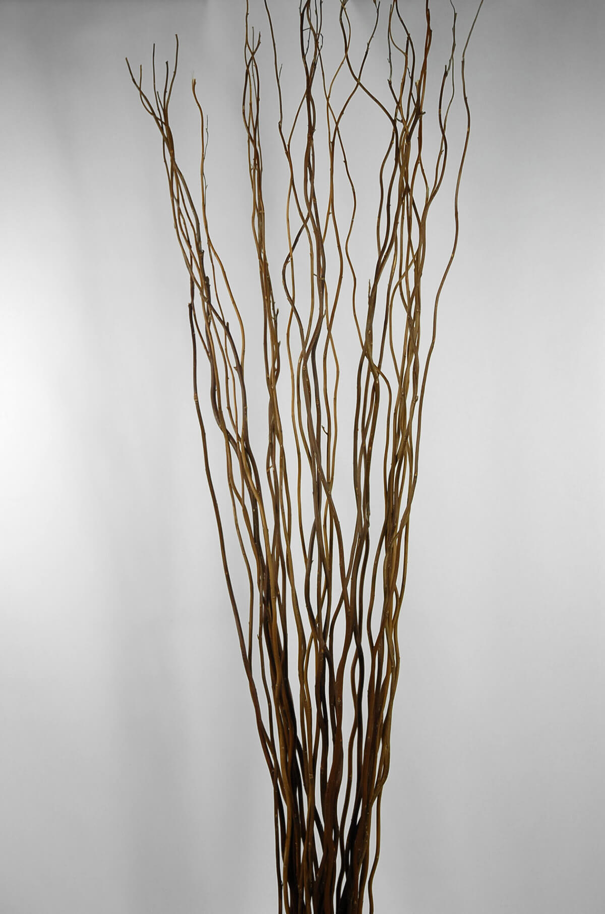 Natural Curly Willow Branches 36 40in 11 Branch Bundle