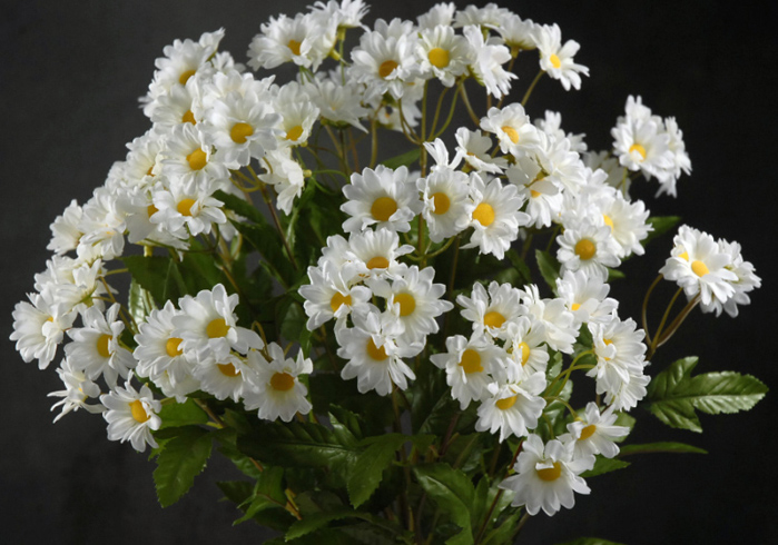 White Daisy Bouquet with 24 Flowers