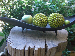DIY:  Make a  Palm Leaf  Tea Light Holder