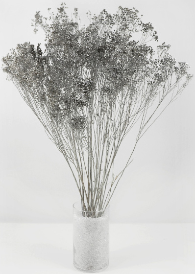 Silver Broom Bloom 3oz Bunch  (20 branches) 28in
