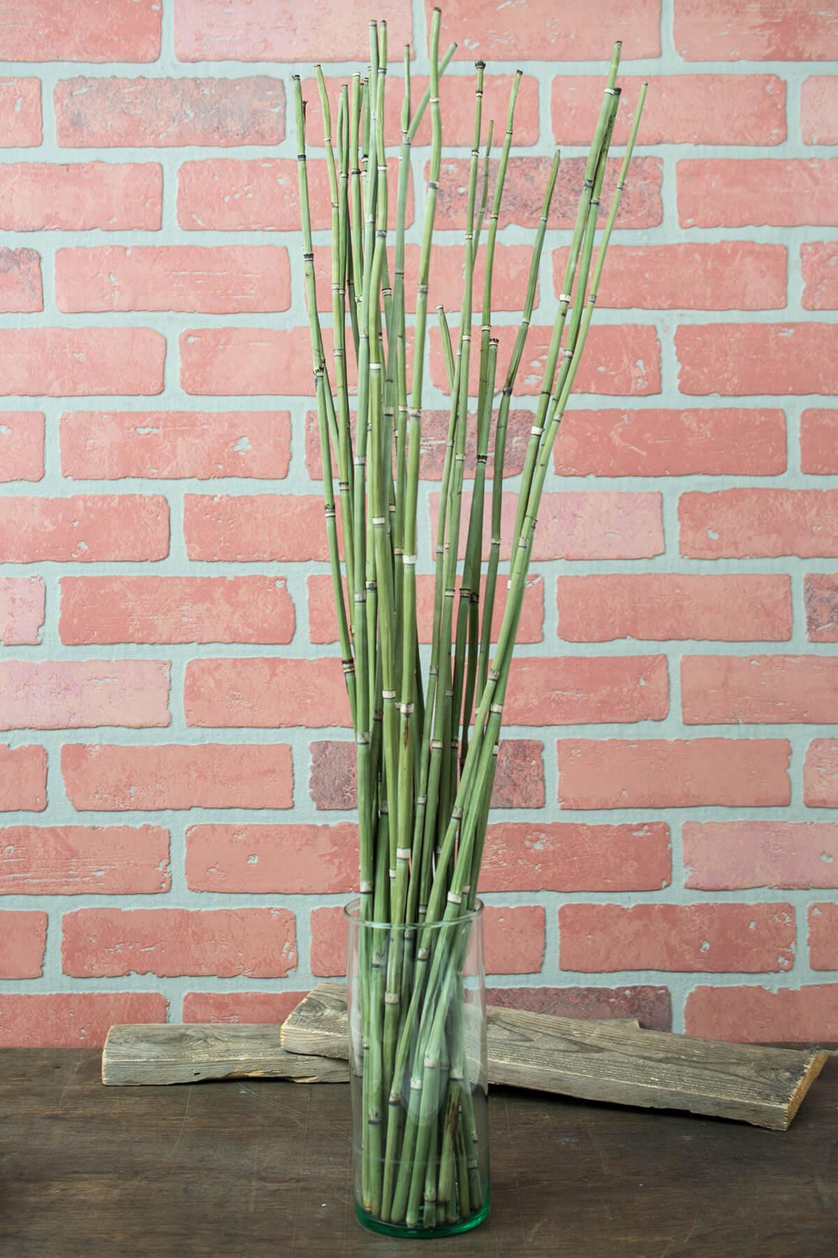Natural Horsetail Reed Bundle x25 Green