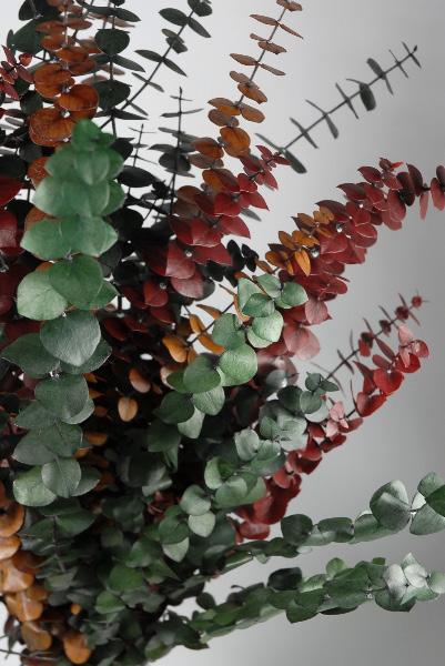Tri Color California Eucalyptus Stems 12 Oz Bundle