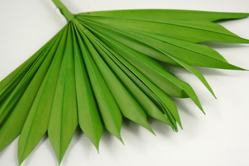 Natural Palm Leaf Fans Leaves Pack of 5