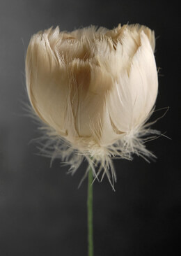 Tan Feather Flower and Wire Stem 18in