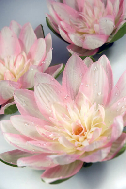 12 Pink Floating Water Lily Flowers