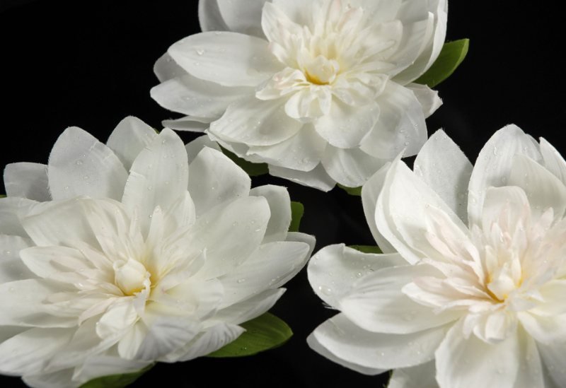 12 Floating White Lotus Flowers With Rain Drops 7 Quot