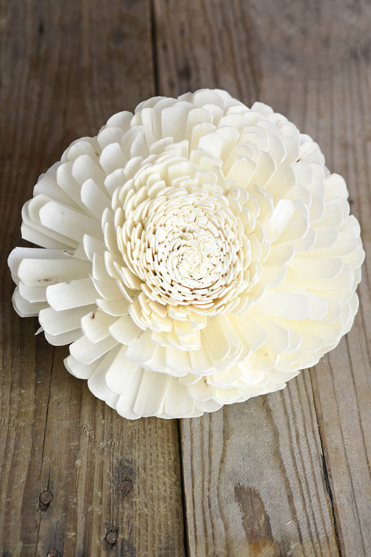 2 Large 8in Sola Belly Flower 20cm Sola Flowers