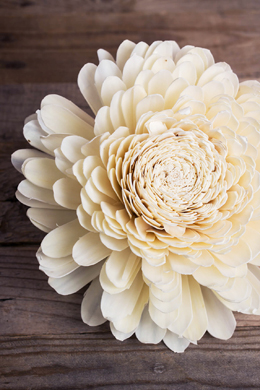 "6 Large 11"" Sola Belly Flowers"