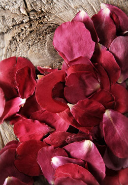 Preserved Soft Red Rose Petals  5 Cups