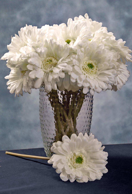 24 Cream White Gerbera Daisy Flowers 9 Quot