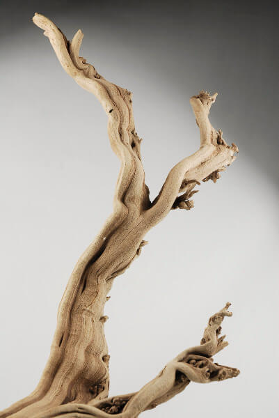 Natural Ghostwood Branches Sandblasted 10-14 in (California Driftwood) Sanitized