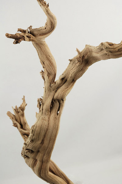 Natural Ghostwood Branches