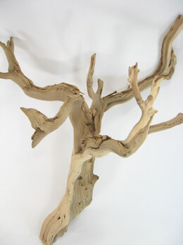 Natural Ghostwood Branches 16-22in Sanded and Sanitized