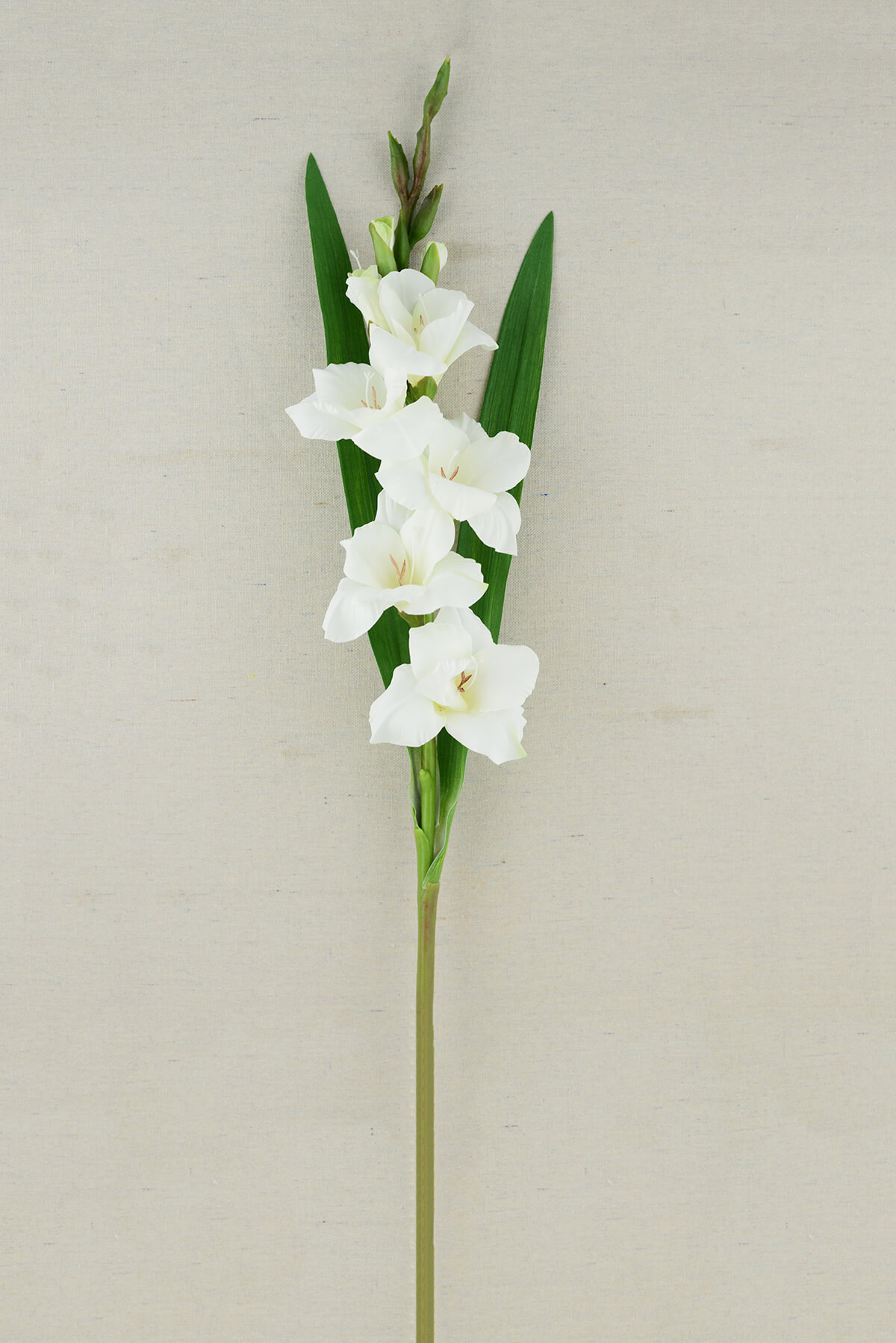 Gladiolus Flower Cream 33in