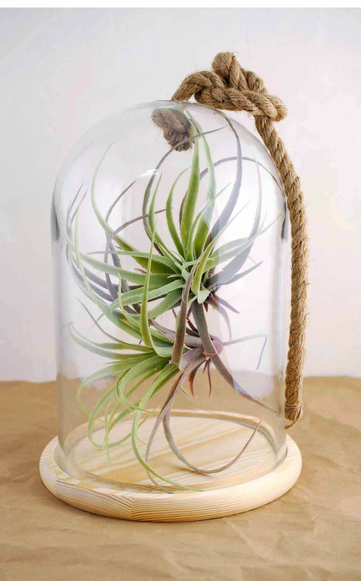 Bell Jar With Rope Amp Wood Base 12 Quot Nautical