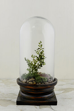 Glass Cloche with Base 12in