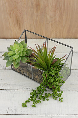 Glass Observation Box Terrarium 5x8in