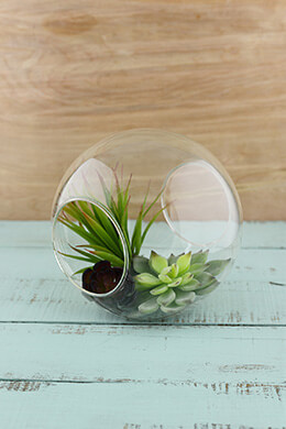 Glass Terrarium Globe 7in