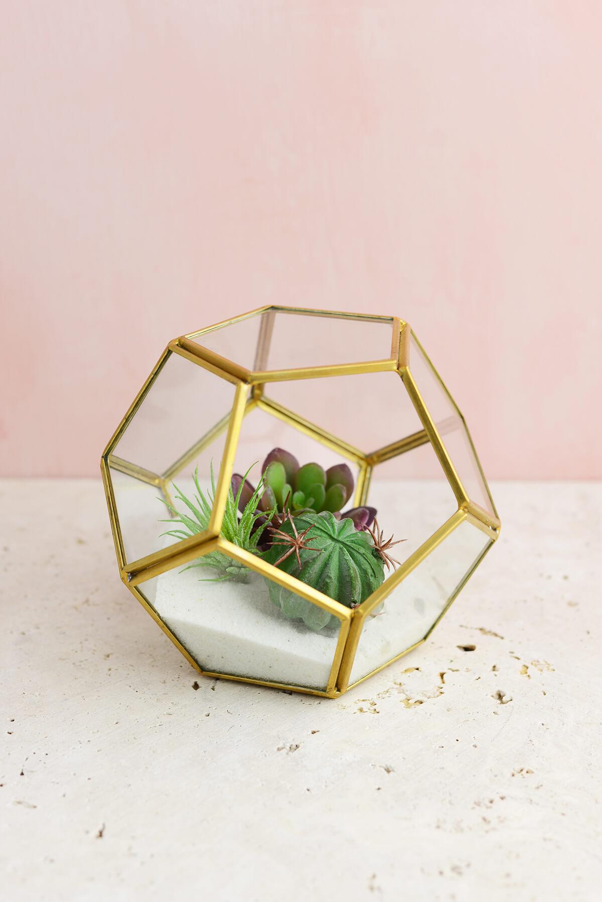 Hira Glass Terrarium Display Box 5 5 Quot X 5 5 Quot