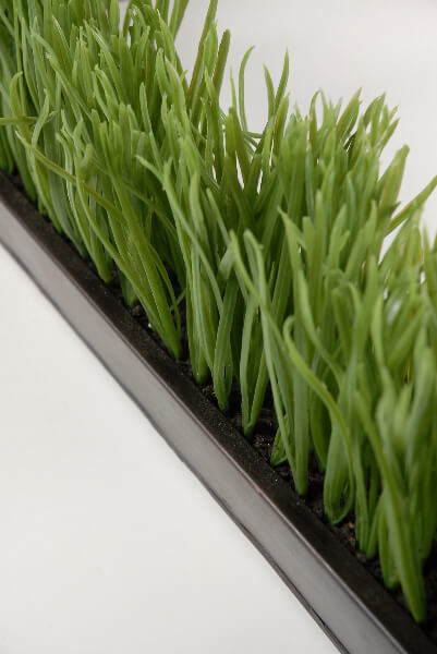 Narrow Amp Long Faux Grass Display In Metal Tray 25 5 Quot Long