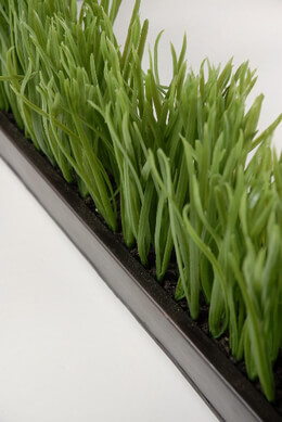 "Narrow & Long Faux Grass Display in Metal Tray 25.5"" long x 2.75"" wide"