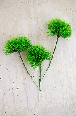36 Green Trick Dianthus Picks 6 Inch