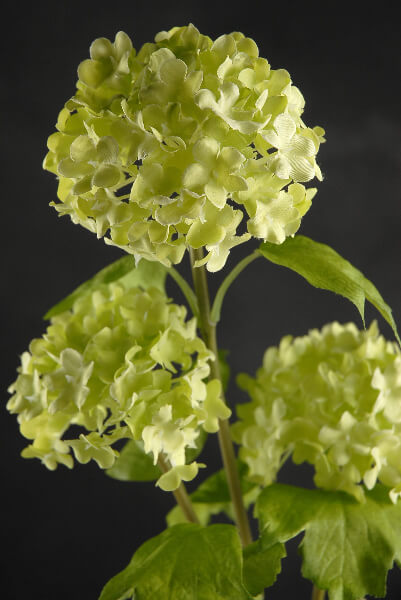 "32"" Green Viburnum Branch with 3 Flowers"