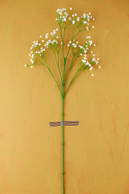 Gypsophila Spray White 26in (Pack of 12)